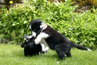 Lenny fights his brother (that's Len on the bottom), aged 3 months.