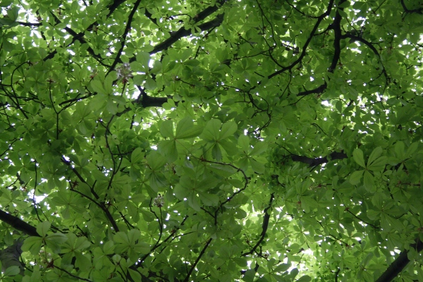 photo of Spring Canopy
