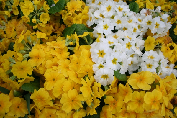 photo of Yellow and White