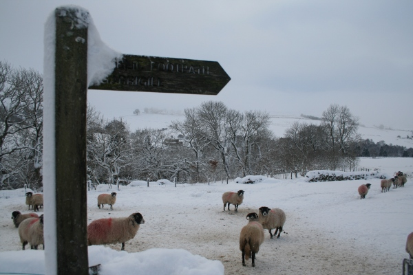 photo of Garrigill Sheep